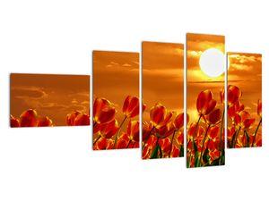 Obraz rozkvetlého lánu s tulipány (V021920V11060)