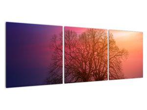 Obraz stromů v mlze (V020088V12040)