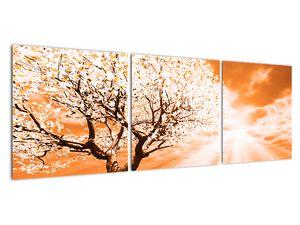 Oranžový obraz stromu (V020095V12040)