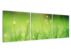 Obraz - rosa na trávě (V020169V12040)