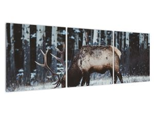 Obraz - jeleň v zime (V020179V12040)