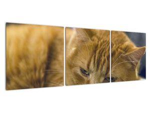 Obraz mačky (V020192V12040)