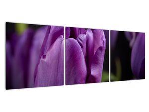 Obraz květů tulipánů (V020215V12040)