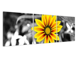 Obraz žluté květiny (V020361V12040)