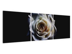 Obraz bílé růže (V020370V12040)