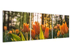 Obraz - oranžové tulipány (V020552V12040)
