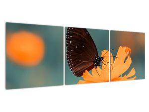 Obraz - motýl na oranžové květině (V020577V12040)