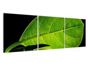 Obraz - zelený list (V020628V12040)