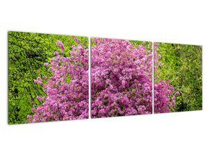 Obraz rozkvetlého stromu na louce (V020654V12040)
