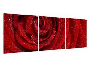 Obraz - detail růže (V020684V12040)