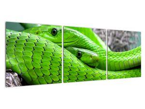 Obraz zelených hadů (V020689V12040)