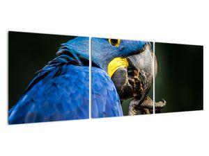 Obraz papouška (V020714V12040)