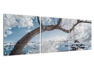 Obraz zasněženého stromu u vody (V020718V12040)