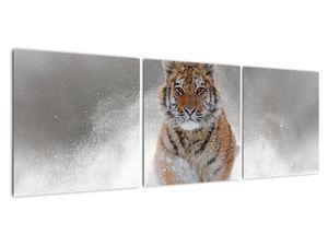 Obraz bežiaceho tigra v snehu (V020719V12040)