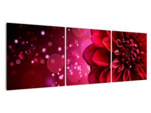 Obraz červené kvety (V020807V12040)