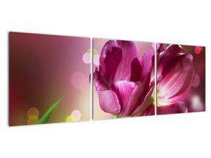 Obraz růžových tulipánů (V020887V12040)