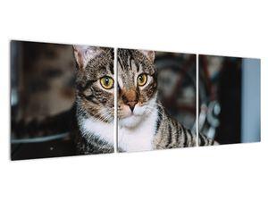 Obraz kočky (V020889V12040)