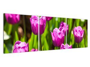 Obraz tulipánov na lúke (V020893V12040)
