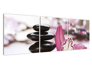 Obraz masážních kamenů a orchidee (V020910V12040)