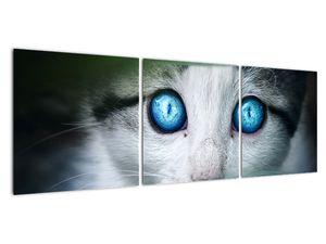 Obraz kočky (V020944V12040)