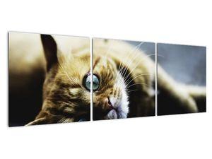 Obraz kočky (V020963V12040)