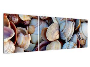 Kagyló képe (V021131V12040)