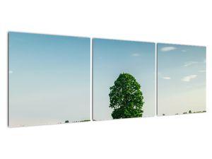 Obraz stromu na louce (V021171V12040)