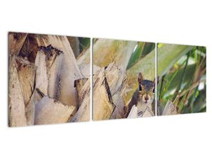 Obraz veverky na stromu (V021177V12040)