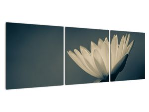 Obraz květiny (V021223V12040)