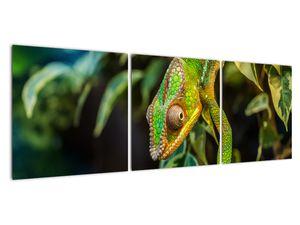 Obraz chameleona (V021236V12040)