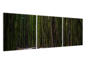 Obraz - Medzi bambusy (V021324V12040)