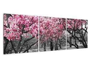 Obraz stromů Magnolíie (V021344V12040)