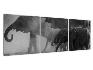 Obraz slonů - černobílý (V021575V12040)