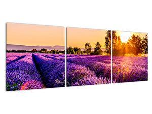 Obraz levandulového pole, Provence (V021590V12040)