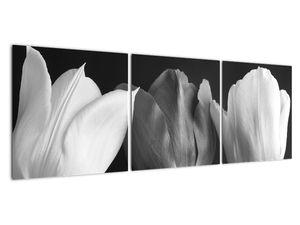 Kép - fekete-fehér tulipán virág (V021916V12040)