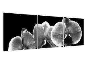 Obraz květu orchideje (V022015V12040)