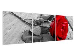 Slika crvene ruže (V022288V12040)