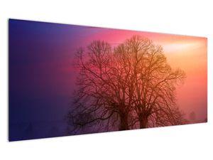 Obraz stromů v mlze (V020088V12050)