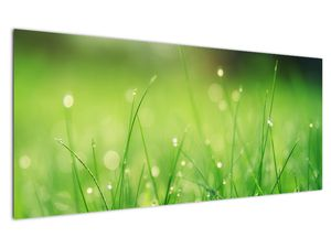 Obraz - rosa na trávě (V020169V12050)