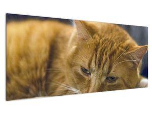Obraz mačky (V020192V12050)