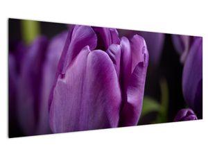 Obraz květů tulipánů (V020215V12050)
