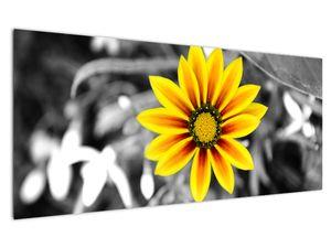 Obraz žluté květiny (V020361V12050)