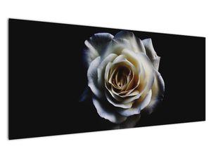 Obraz bílé růže (V020370V12050)