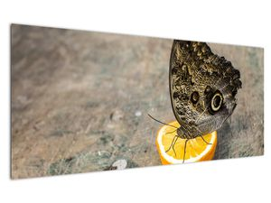 Obraz motýla (V020454V12050)