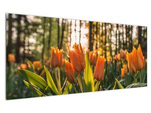 Obraz - oranžové tulipány (V020552V12050)