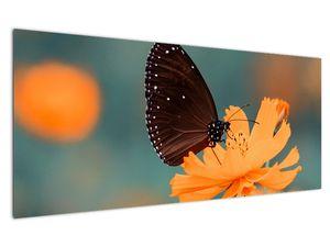 Obraz - motýl na oranžové květině (V020577V12050)