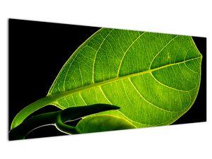 Obraz - zelený list (V020628V12050)