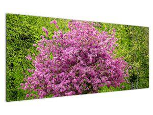 Obraz rozkvetlého stromu na louce (V020654V12050)
