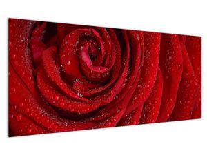 Obraz - detail růže (V020684V12050)