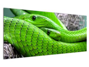 Obraz zelených hadů (V020689V12050)